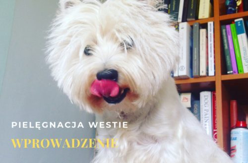 west highland white terrier-pielegnacja